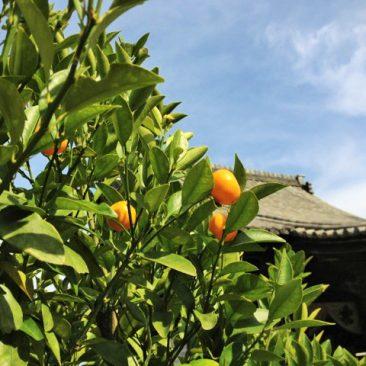 橘舎プロジェクト